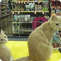 Adopt A Pet :: Peanut - Overland Park, KS