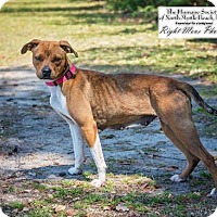 Adopt A Pet :: Dutchie - North Myrtle Beach, SC