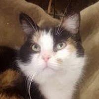 Adopt A Pet :: Jezabelle - Dundee, MI