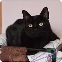 Adopt A Pet :: Lovebug - Ocean City, NJ