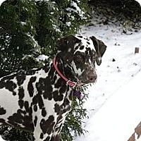 Adopt A Pet :: Aurora - Middletown, PA