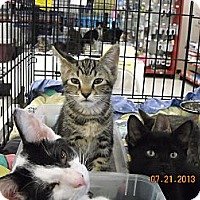 Adopt A Pet :: Max - Riverside, RI