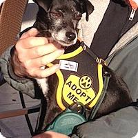 Adopt A Pet :: Titan (Moose) - Greenville, SC