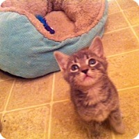 Adopt A Pet :: Toasted Marshmellow - Ft. Lauderdale, FL
