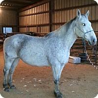 Adopt A Pet :: General Lee - Waleska, GA