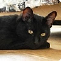 Adopt A Pet :: Sherbert - Vancouver, BC