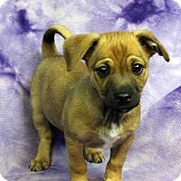 Adopt A Pet :: TUCKER - Westminster, CO