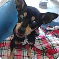 Adopt A Pet :: Juanita - New Smyrna Beach, FL