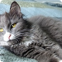 Adopt A Pet :: Alice - Portland, OR