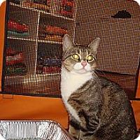 Adopt A Pet :: Naomi - Brooklyn, NY