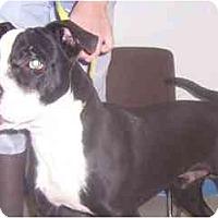 Adopt A Pet :: Tuxedo - courtesy Post - Scottsdale, AZ