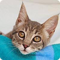 Adopt A Pet :: Jill - Palmdale, CA