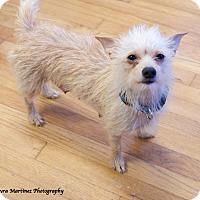 Adopt A Pet :: Trixie - Marietta, GA