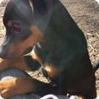 Adopt A Pet :: Abel - Knoxville, TN