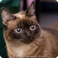 Adopt A Pet :: Mulan - Fountain Hills, AZ