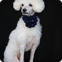 Adopt A Pet :: Pierre - SAN PEDRO, CA