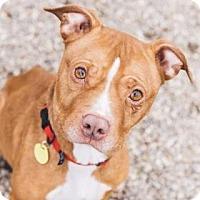 Adopt A Pet :: Kiera - Cleveland, OH