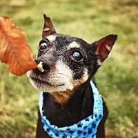 Adopt A Pet :: Buccaroo - Landenberg, PA
