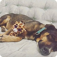 Adopt A Pet :: Nala - Mount Hope, ON