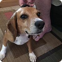 Adopt A Pet :: Emma - Media, PA