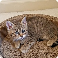 Adopt A Pet :: Harvey - Columbus, OH