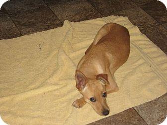 Basenji Mix Dog for adoption in Greenville, Rhode Island - Candy