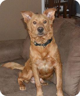 Retriever (Unknown Type)/Golden Retriever Mix Dog for adoption in Marietta, Georgia - Toby