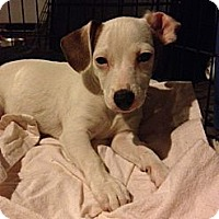 Adopt A Pet :: Jack - Lake Forest, CA