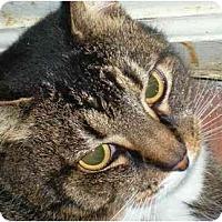 Adopt A Pet :: Lourdes - Summerville, SC