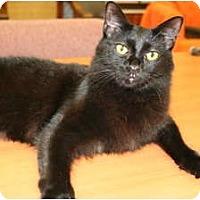 Adopt A Pet :: Spike - Naples, FL