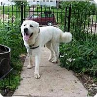 Adopt A Pet :: Smiley - Minneapolis, MN
