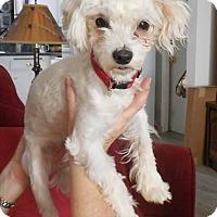 Adopt A Pet :: Tazer - Nuevo, CA