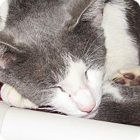 Adopt A Pet :: Revolution - Athens, GA