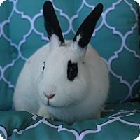Adopt A Pet :: Dottie - Hillside, NJ