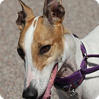 Adopt A Pet :: Hilda - Tucson, AZ