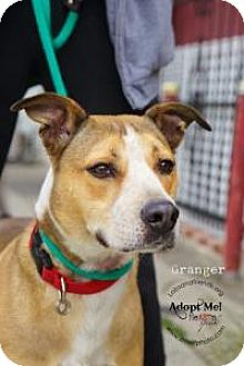 Cattle Dog Mix Dog for adoption in Burbank, California - Ranger