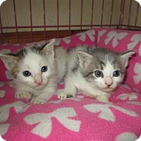 Adopt A Pet :: Addison&Riley - Naples, FL
