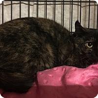 Adopt A Pet :: Dr Bombay - Columbus, OH