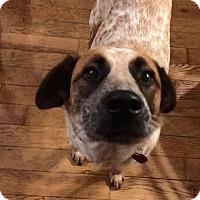 Adopt A Pet :: Josie - Parker, KS