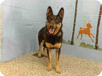 German Shepherd Dog/Shepherd (Unknown Type) Mix Dog for adoption in San Bernardino, California - URGENT NOW!  San Bernardino