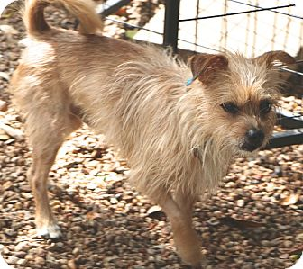 Terrier (Unknown Type, Small) Mix Dog for adoption in Woonsocket, Rhode Island - Baxter