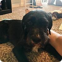 Adopt A Pet :: Alfredo - Houston, TX