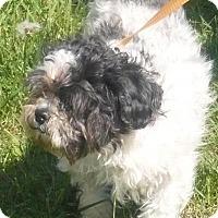 Adopt A Pet :: Peter Pan, D12 - Mineral, VA