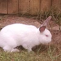 Adopt A Pet :: Athena - Hahira, GA