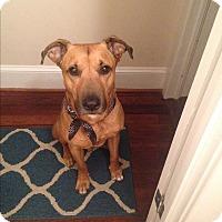 Adopt A Pet :: Romeo (COURTESY POST) - Baltimore, MD