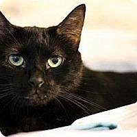 Adopt A Pet :: Sheba - Alexandria, VA