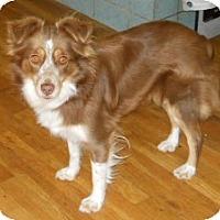 Adopt A Pet :: Molly - dewey, AZ