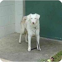 Adopt A Pet :: Maggie - Orlando, FL