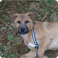 Adopt A Pet :: Bambi - Albany, NY