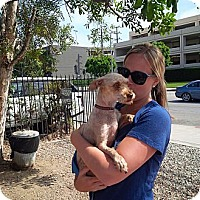 Adopt A Pet :: Vinnie - Santa Monica, CA